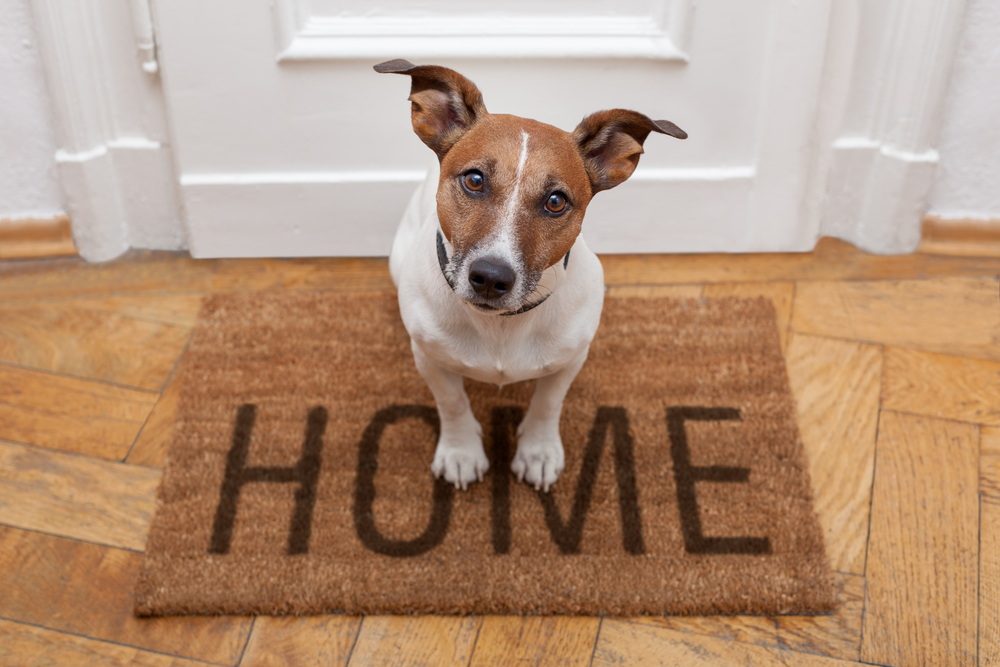 How to Pet-Proof Your Home? A Room-By-Room Guide.